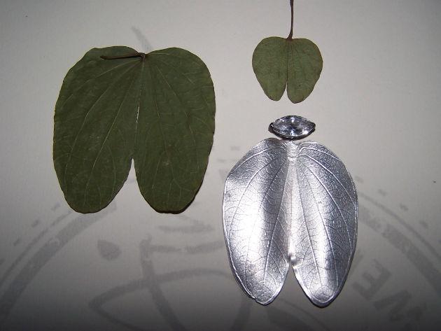 Bauhinia tree inspiration